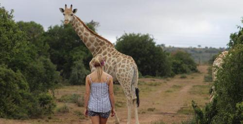 Walk with Giraffes