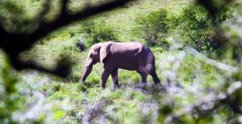 Addo's Elephant from bottom Tipi