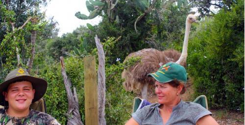 Ostrich visiting top Tipi